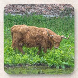 Highland cow hard plastic coasters
