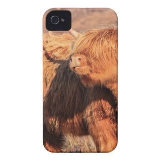 Highland Cow iPhone 4 Barely There iPhone 4 Cover