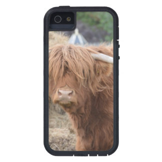 Highland Cow iPhone 5 Covers