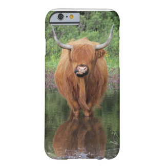 Highland cow iPhone 6 case