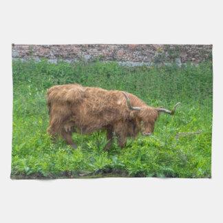Highland Cow kitchen towel