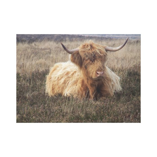 Highland Cow on Dartmoor Canvas Print