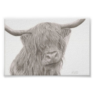 Highland Cow Posters