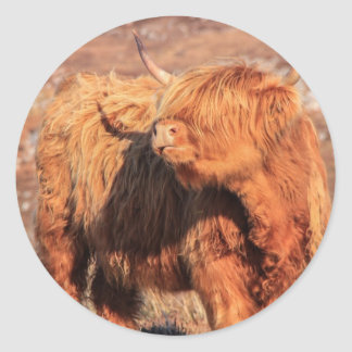 Highland Cow Stickers