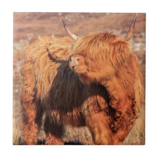 Highland Cow Tile/Trivet Tile
