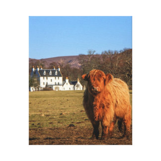 Highland Cow Wrapped Canvas