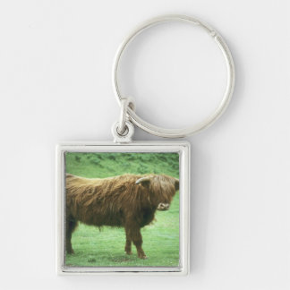 Highland Steer, Island of Mull, Inner Silver-Colored Square Key Ring