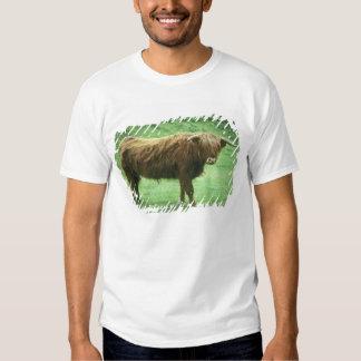Highland Steer, Island of Mull, Inner T-shirt
