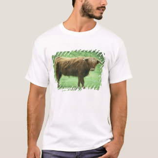 Highland Steer, Island of Mull, Inner T-Shirt