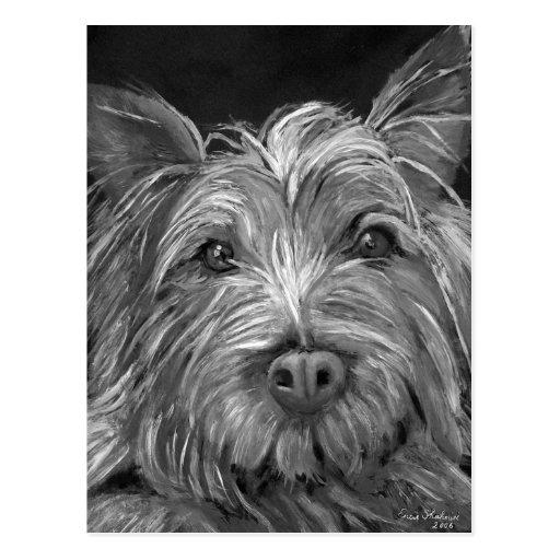 Highland Terrier Postcard