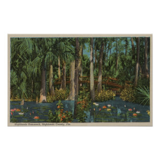 Highlands County, FL - View of Highlands Hammock Poster
