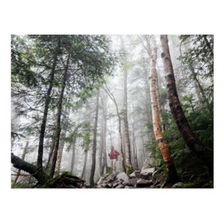 Hiker walks through forest of tall trees postcard