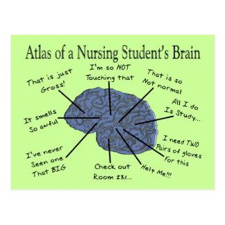 "Hilarious Nursing Student ""Brain"" Gifts Postcard"