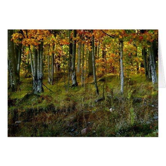 Hillside Birch Card