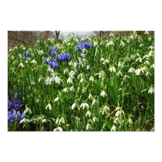 Hillside of Early Spring Flowers I Photo Print