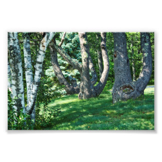 Hillside Trees Photo Print