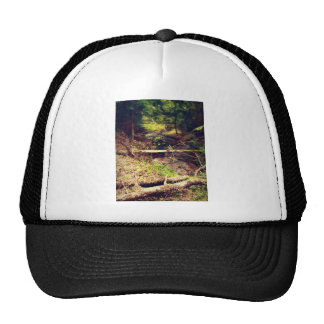 Hilton Creek Cap