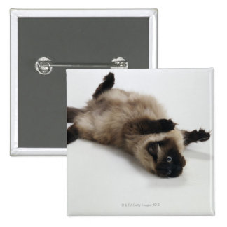Himalayan Cat Lying on his Back 15 Cm Square Badge