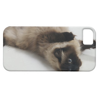Himalayan Cat Lying on his Back Case For The iPhone 5