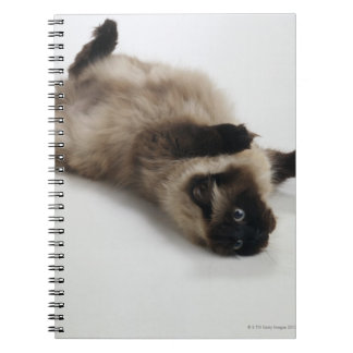 Himalayan Cat Lying on his Back Notebook