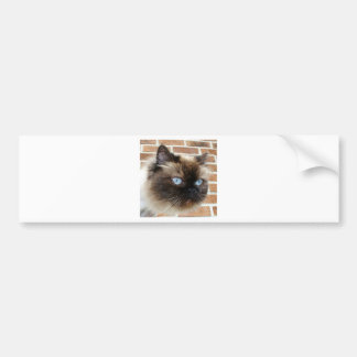 Himalayan cat photo with blue eyes bumper stickers