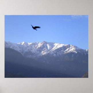 Himalayan eagle poster