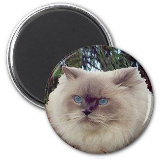 Himalayan Persian Cat 6 Cm Round Magnet