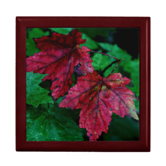Hint of Autumn Large Square Gift Box