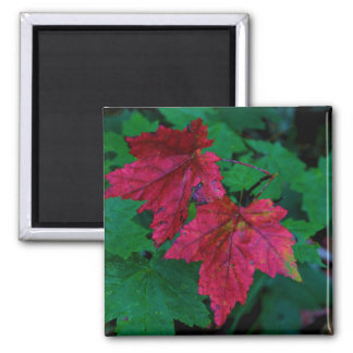 Hint of Autumn Magnet