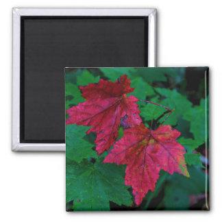 Hint of Autumn Square Magnet