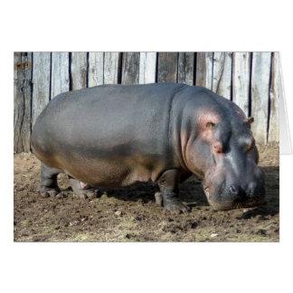 hippo2-2 greeting card