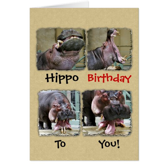 Hippo Birthday To You Greeting Card