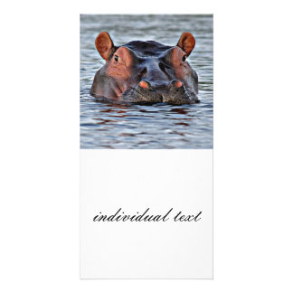 hippo custom photo card