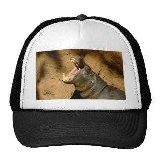 hippo hungry cap