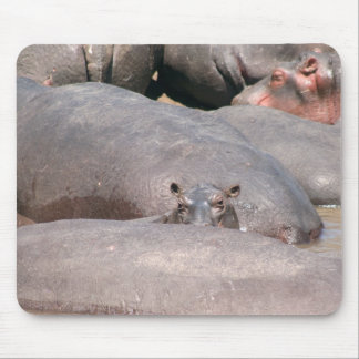 Hippo Looking at You Mouse Mat