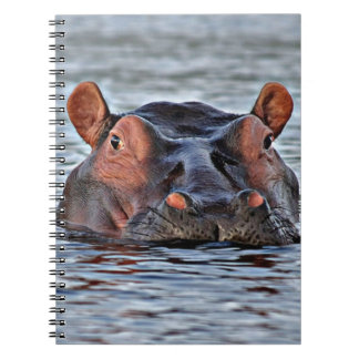 hippo notebook