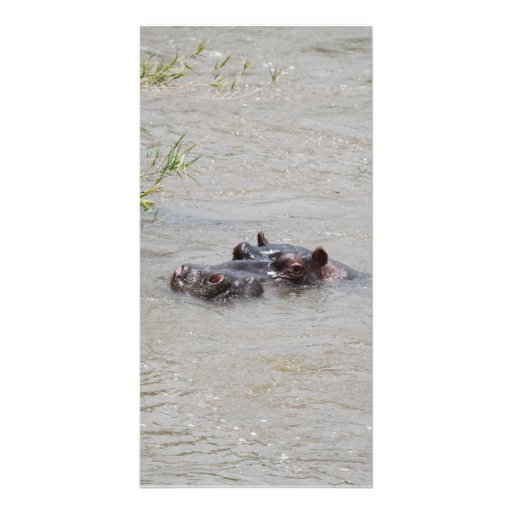 Hippo Vertical Photo Cards