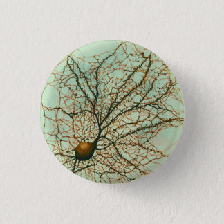 hippocampal neuron - Button & Pin