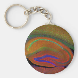 Hippocampal neurons 3 basic round button key ring
