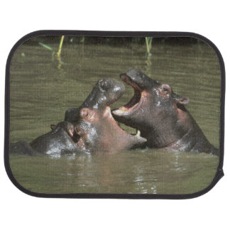 Hippopotamus, (H. amphibius), mother & young Car Mat