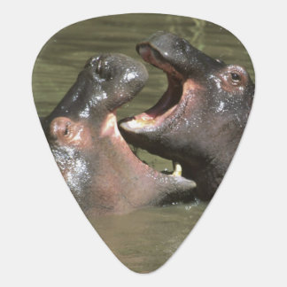 Hippopotamus, (H. amphibius), mother & young Guitar Pick