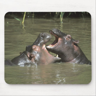 Hippopotamus, (H. amphibius), mother & young Mouse Mat