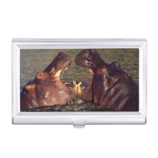 Hippopotamus (Hippopotamus Amphibius) Bulls Business Card Holder