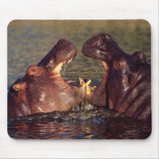 Hippopotamus (Hippopotamus Amphibius) Bulls Mouse Mat