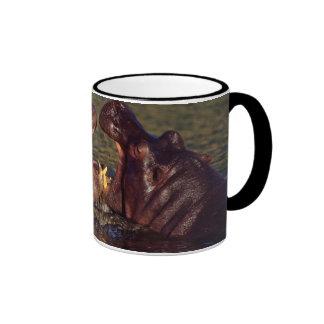 Hippopotamus (Hippopotamus Amphibius) Bulls Mugs