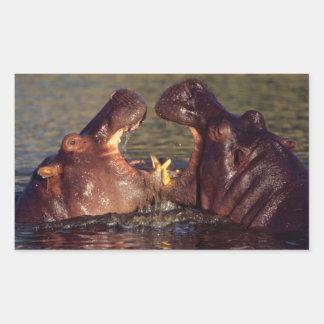 Hippopotamus (Hippopotamus Amphibius) Bulls Rectangular Sticker