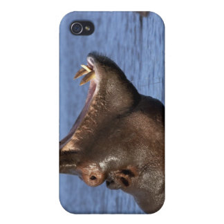 Hippopotamus (Hippopotamus amphibius) in the Covers For iPhone 4