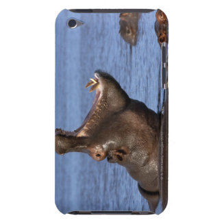 Hippopotamus (Hippopotamus amphibius) in the iPod Touch Covers