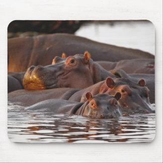 Hippopotamus, Hippopotamus amphibius, Lake Mouse Mat