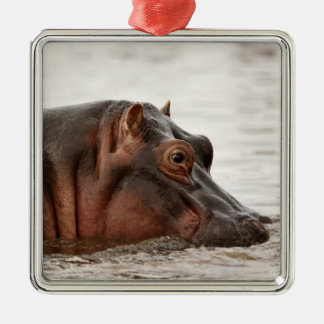 Hippopotamus, Hippopotamus amphibius, Lake Silver-Colored Square Decoration